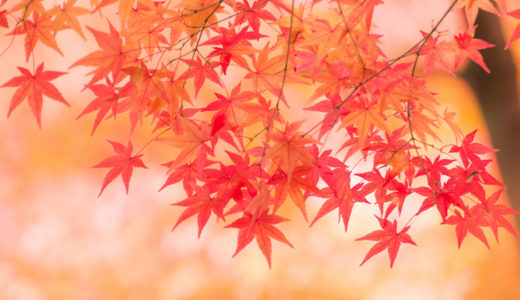 パーソナルカラー(Autumn秋)の人必見!貴方に似合う髪色、メイク!